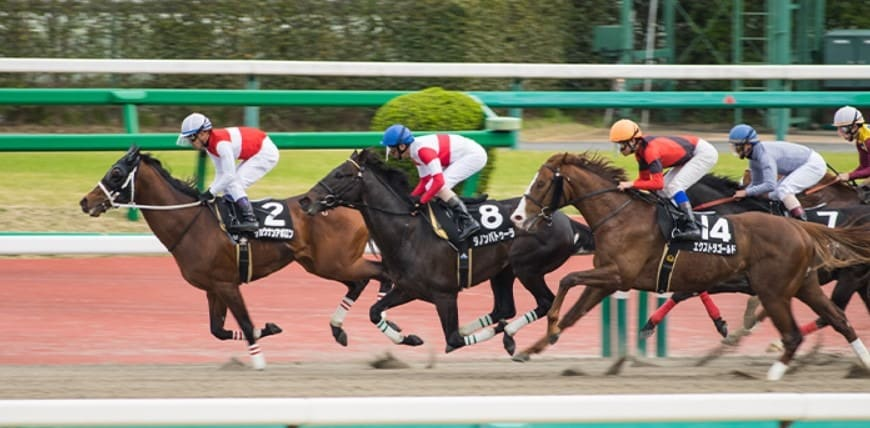 競馬 ワイド 効率